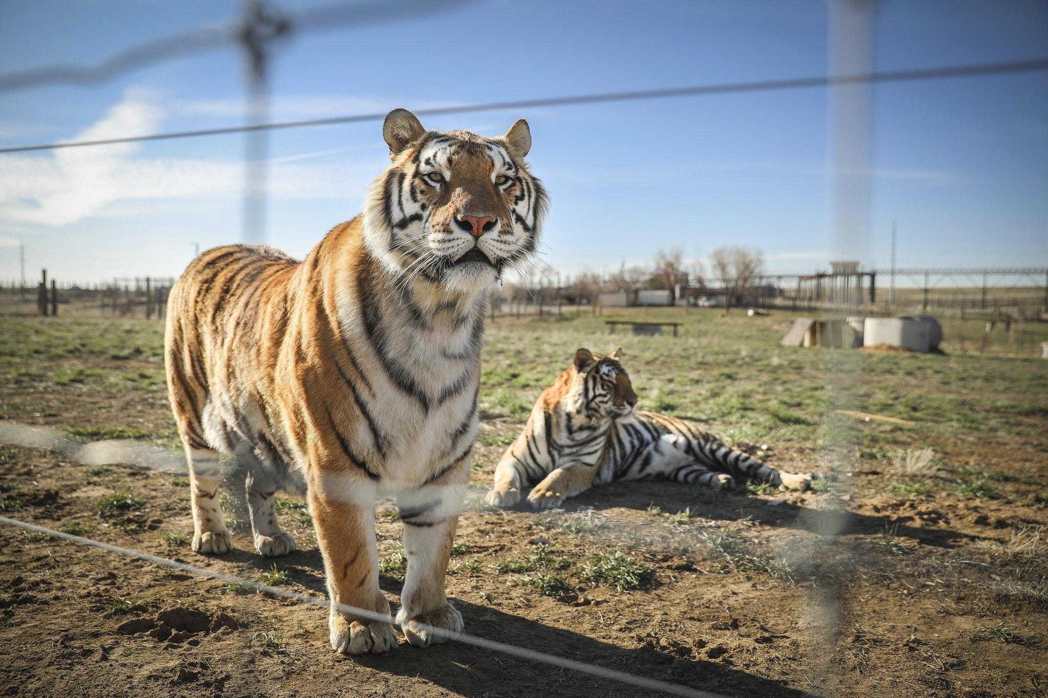 zoo-tiger-king-netflix