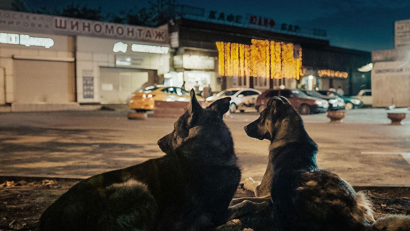 space-dogs-migliori-film